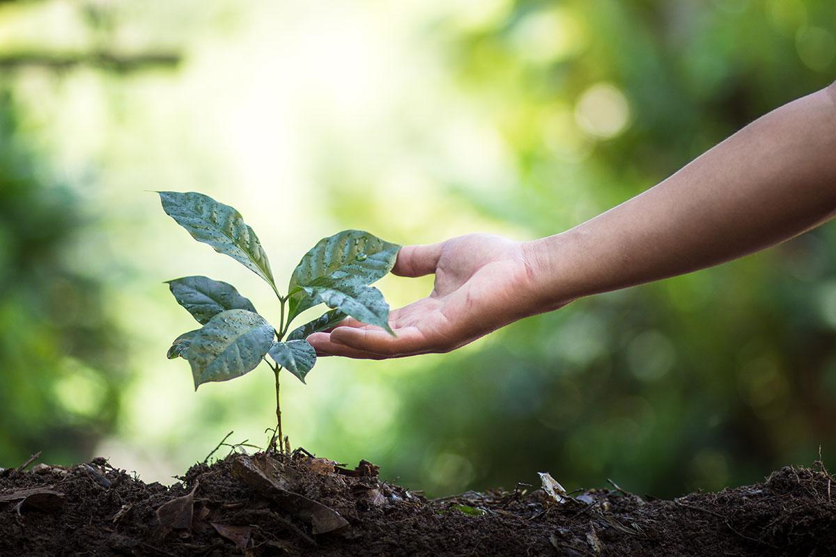 Tạo thói quen sống xanh từ nhiều điều đơn giản trong cuộc sống