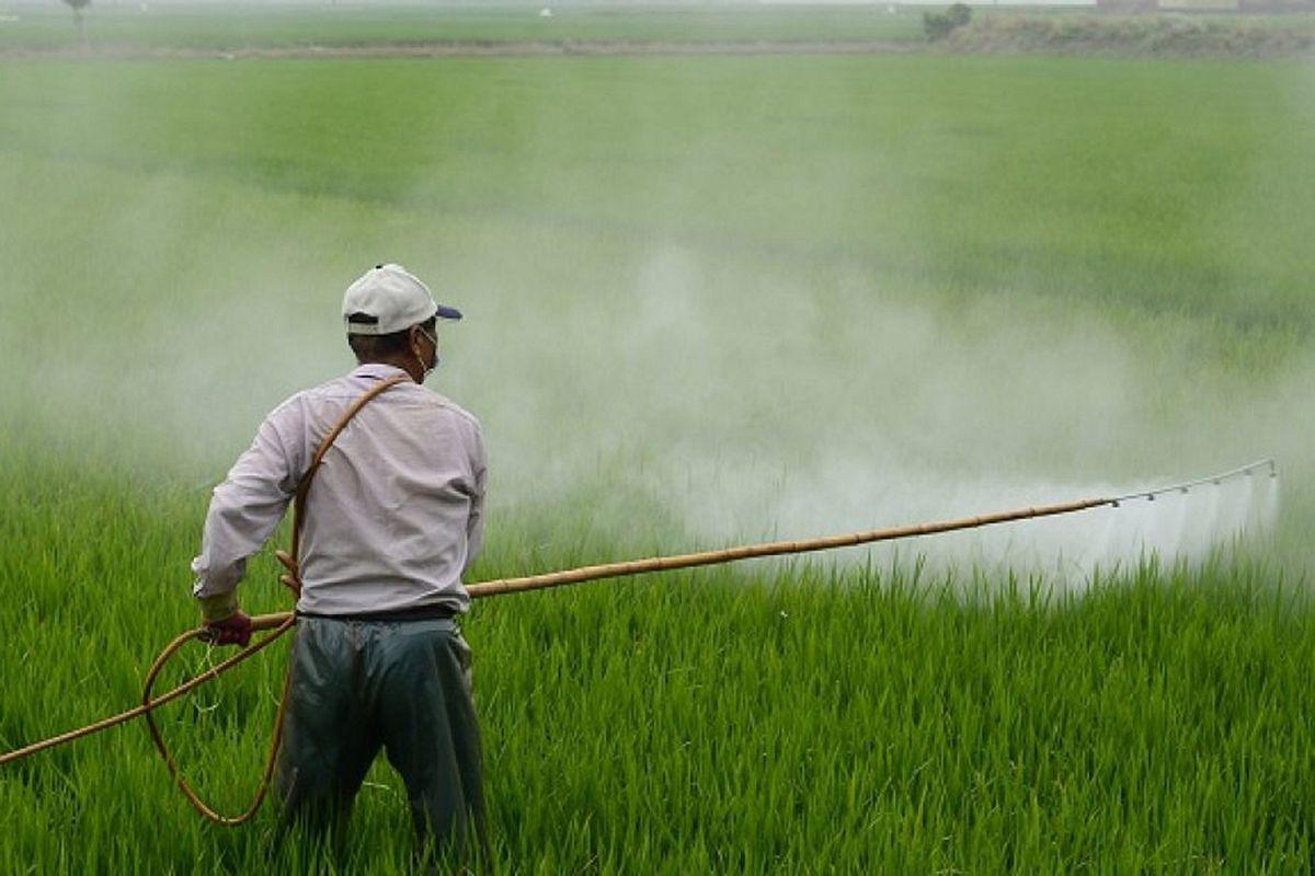 Khi nền nông nghiệp 'tự sát' bằng thuốc bảo vệ thực vật