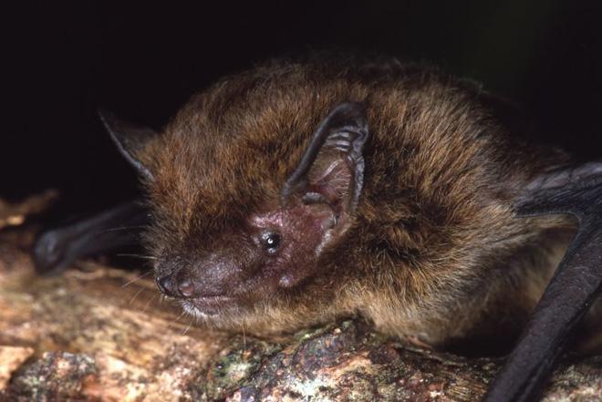 Đây là danh sách toàn bộ 160 loài sinh vật đã tuyệt chủng trong thập niên 2010 - Ảnh 5.