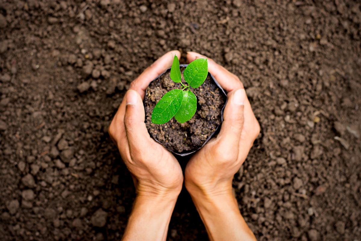 Cẩm nang hướng dẫn trồng cây xanh