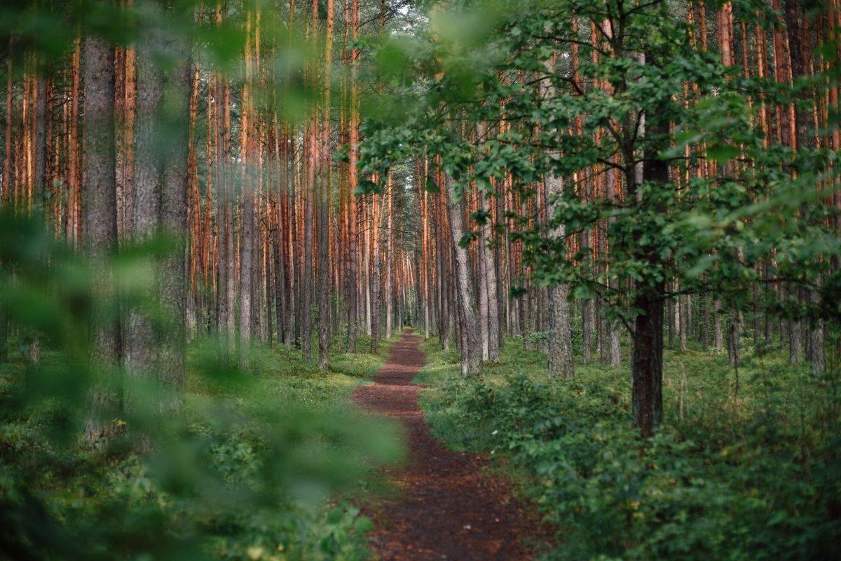Thiên nhiên chính là thứ thuốc an thần tốt nhất cho loài người
