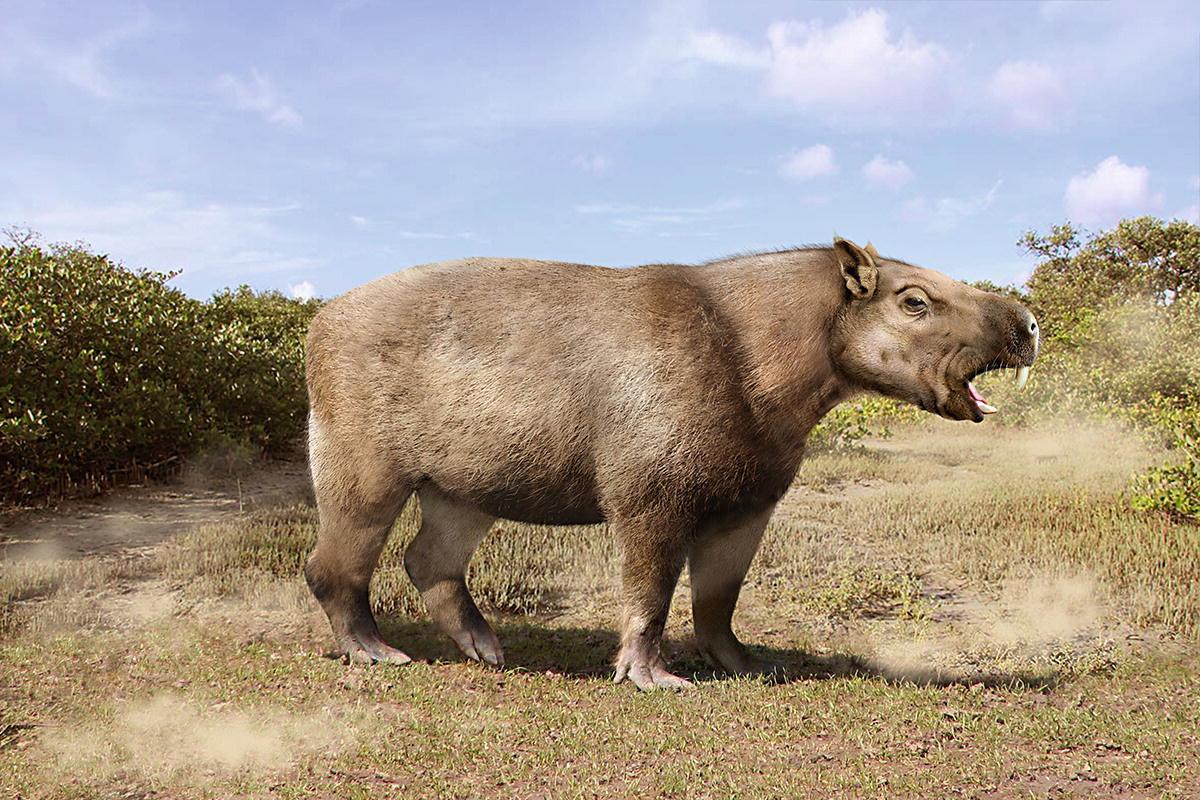 """Chùm ảnh: Josephoartigasia monesi – loài chuột """"khủng' nhất từng tồn tại trên quả đất"""