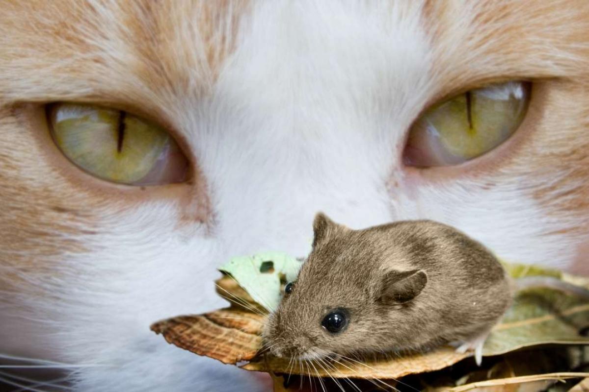 Con chuột – hình tượng độc đáo trong văn học