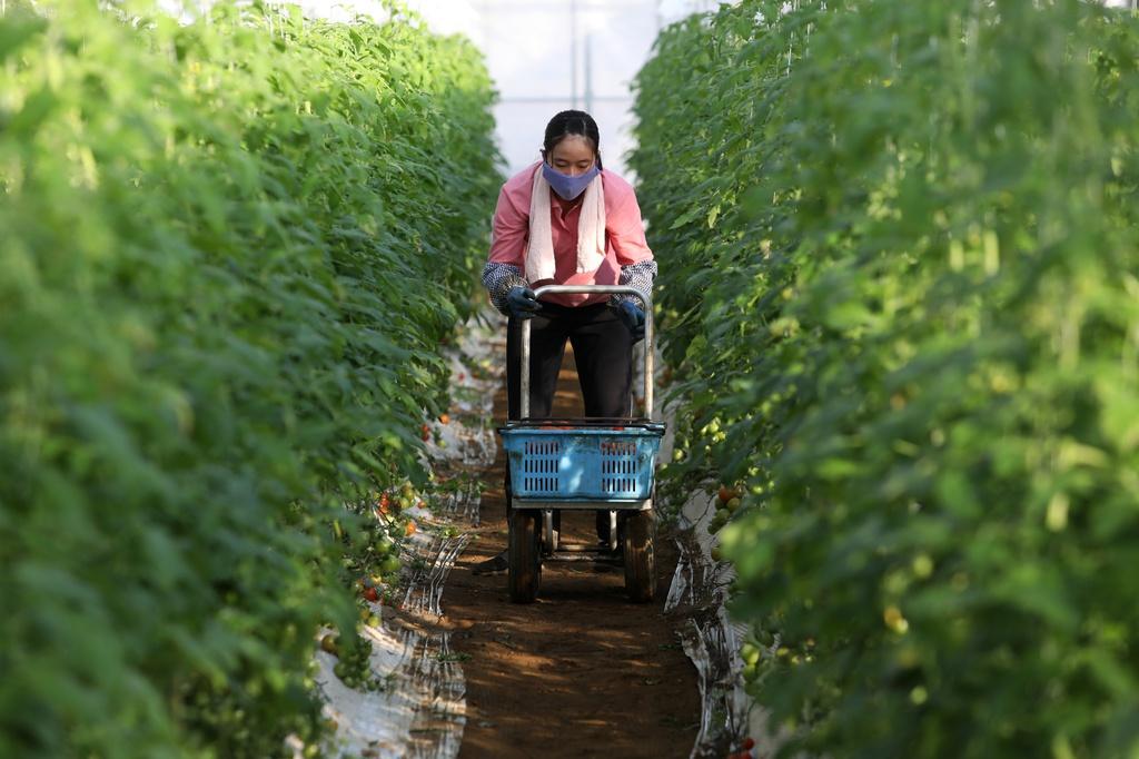 Dòng người nhập cư thay máu Nhật Bản giữa 'cỗ máy tận thế kinh tế'