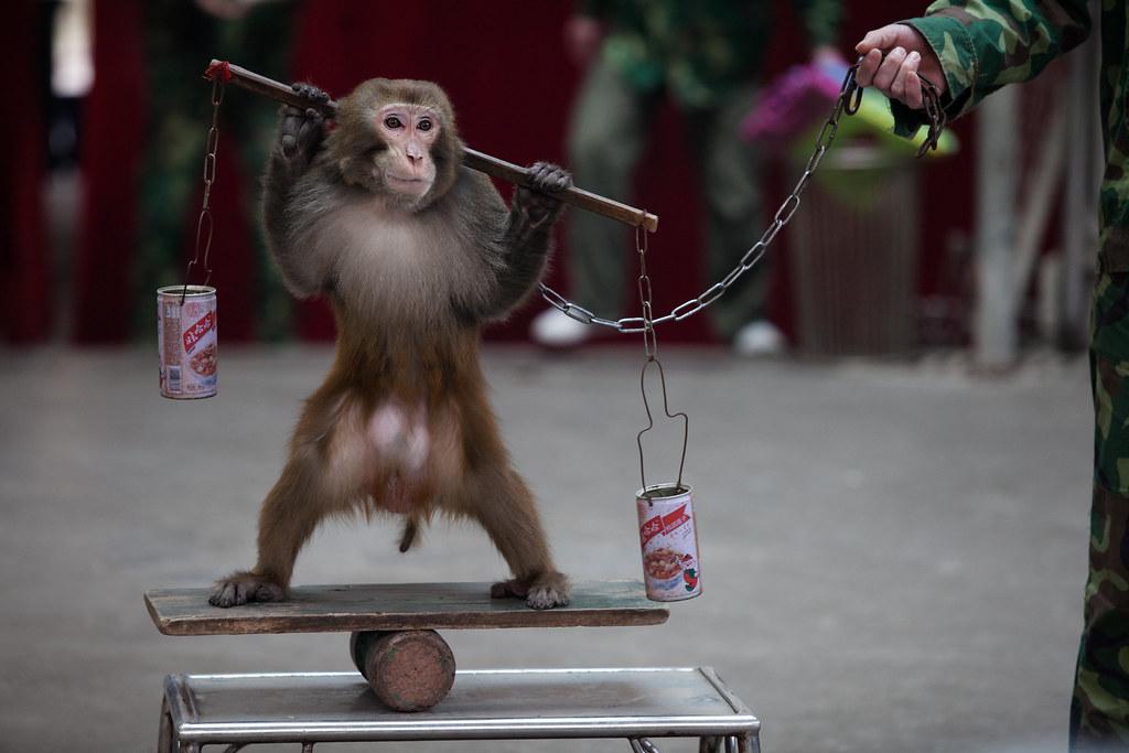 Tại sao động vật cần có quyền hợp pháp như con người?