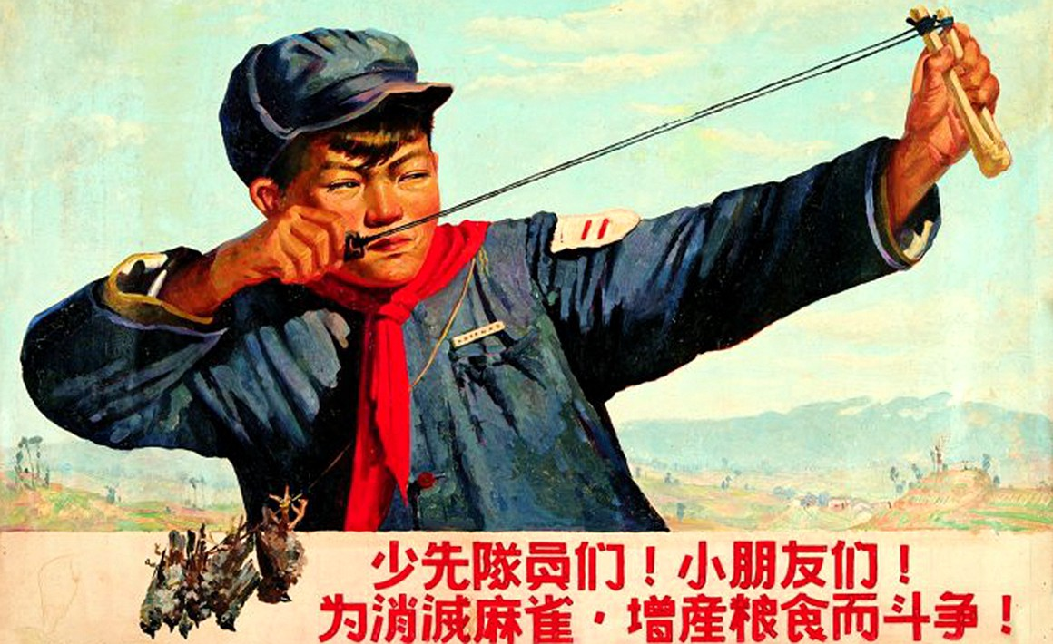 Bi kịch nhân – quả từ chiến dịch diệt chim sẻ của Mao Trạch Đông