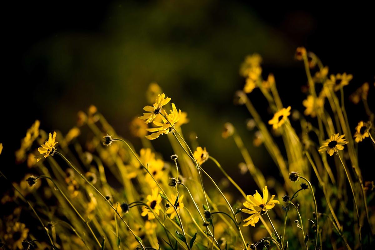 Cảm hứng mùa xuân trong tập Lửa Thiêng của Huy Cận