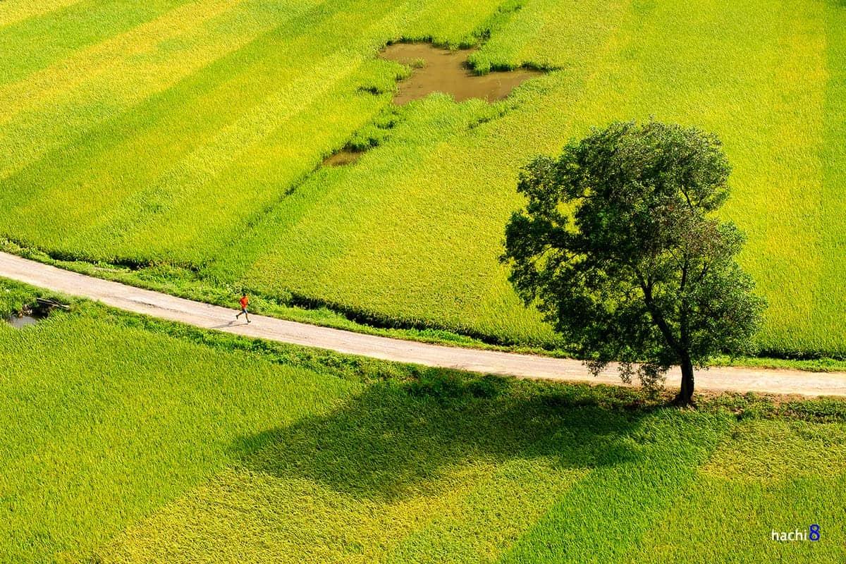 Thơ lục bát của Nguyễn Bính: Một góc nhìn văn hóa