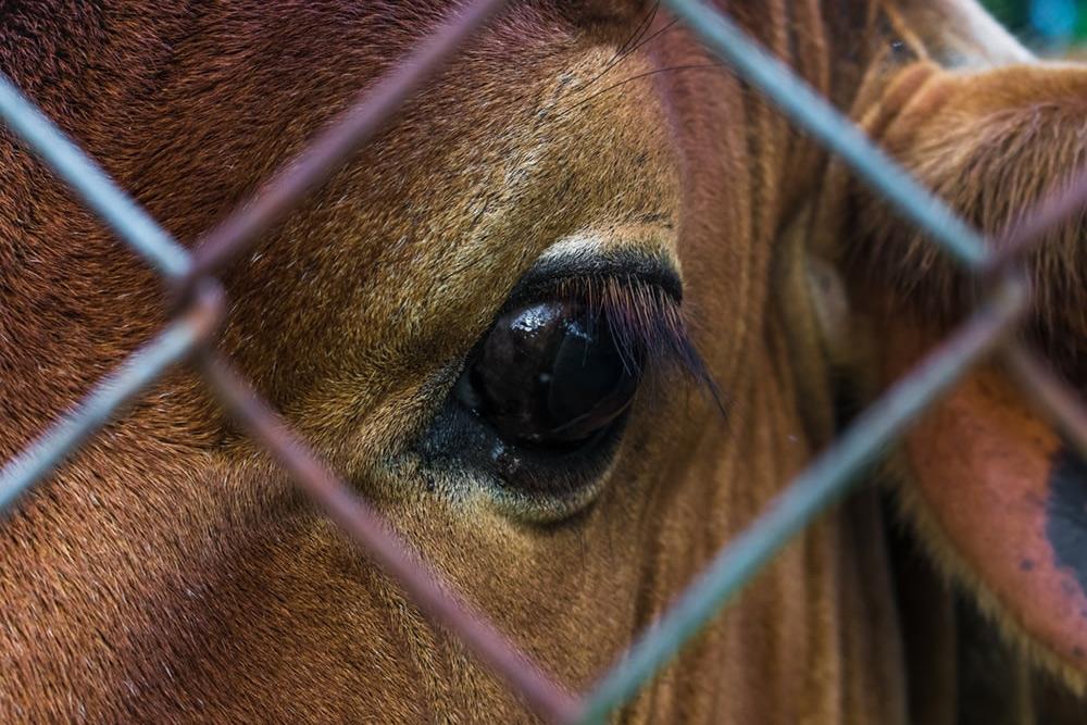 Động vật, sự cảm thông và các vấn đề đạo đức chia rẽ chúng ta