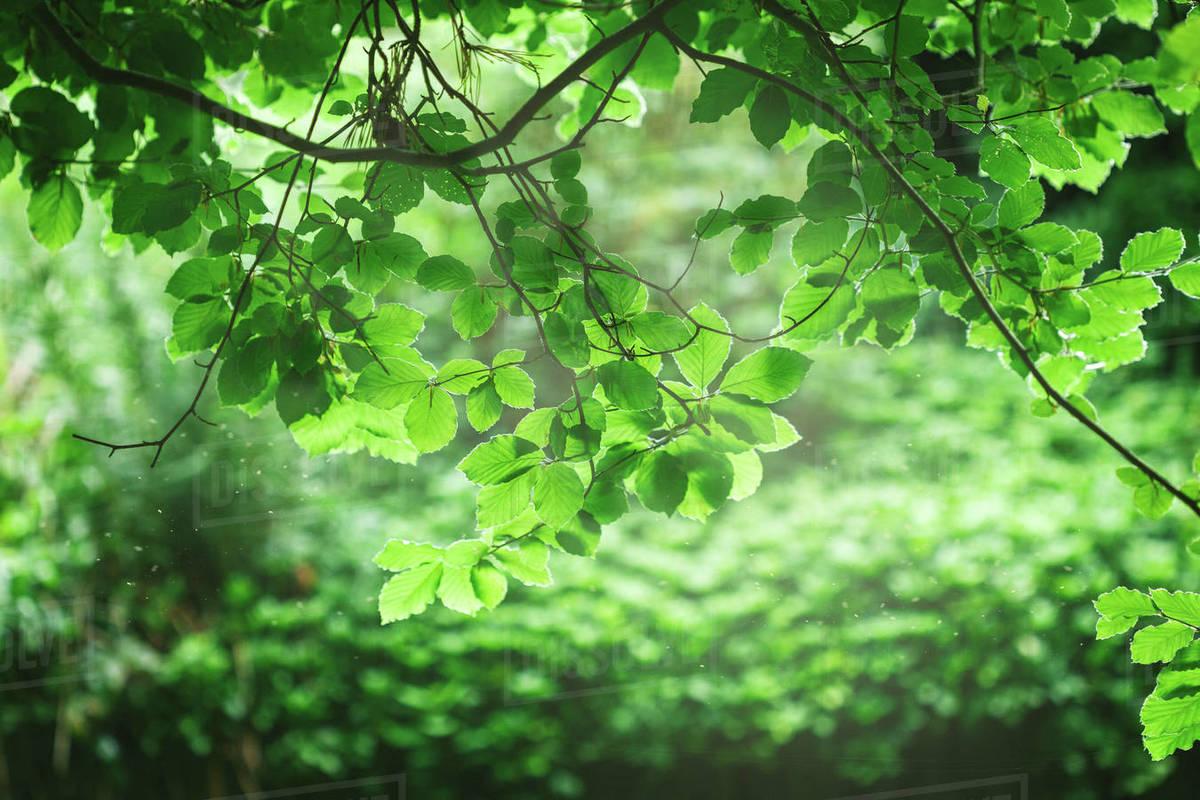 Một đời người một rừng cây – một bài ca về nhân cách sống