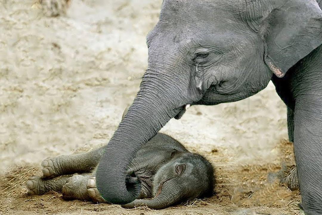Con người, động vật và nỗi đau trước cái chết của đồng loại