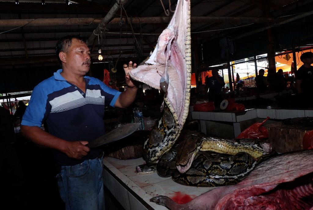 Chùm ảnh: Bên trong chợ động vật nổi tiếng Indonesia