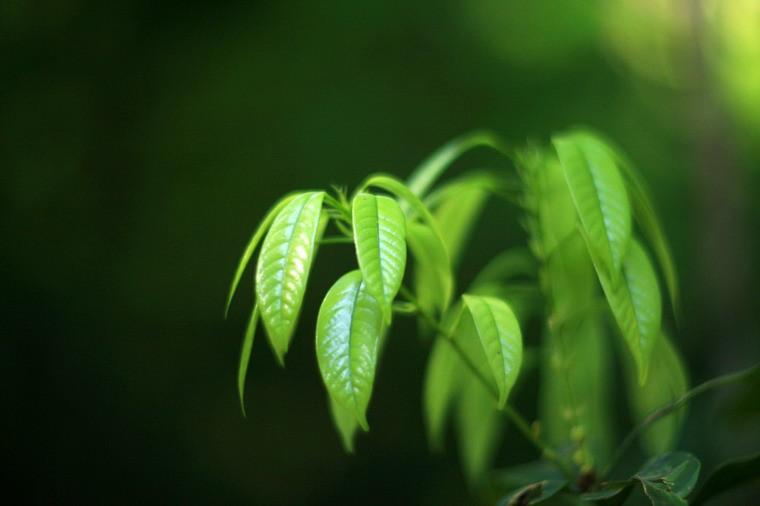 Mùa xuân dưới góc nhìn thơ thiền Việt Nam