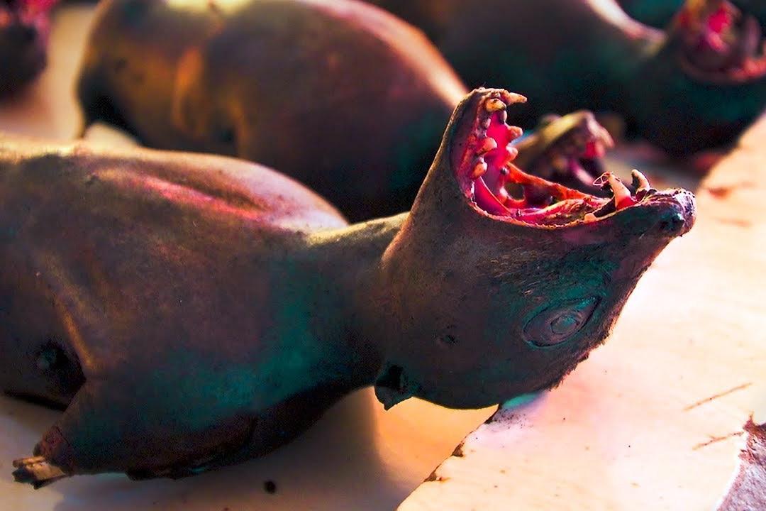 Ăn thịt thú rừng – tập quán ăn uống mông muội, bệnh hoạn cần chấm dứt