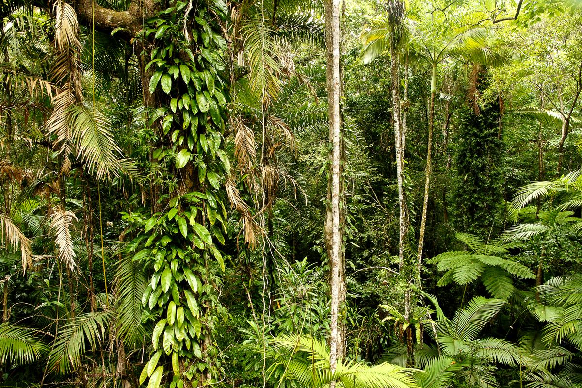 Tại sao chúng ta phải trồng nhiều cây xanh?