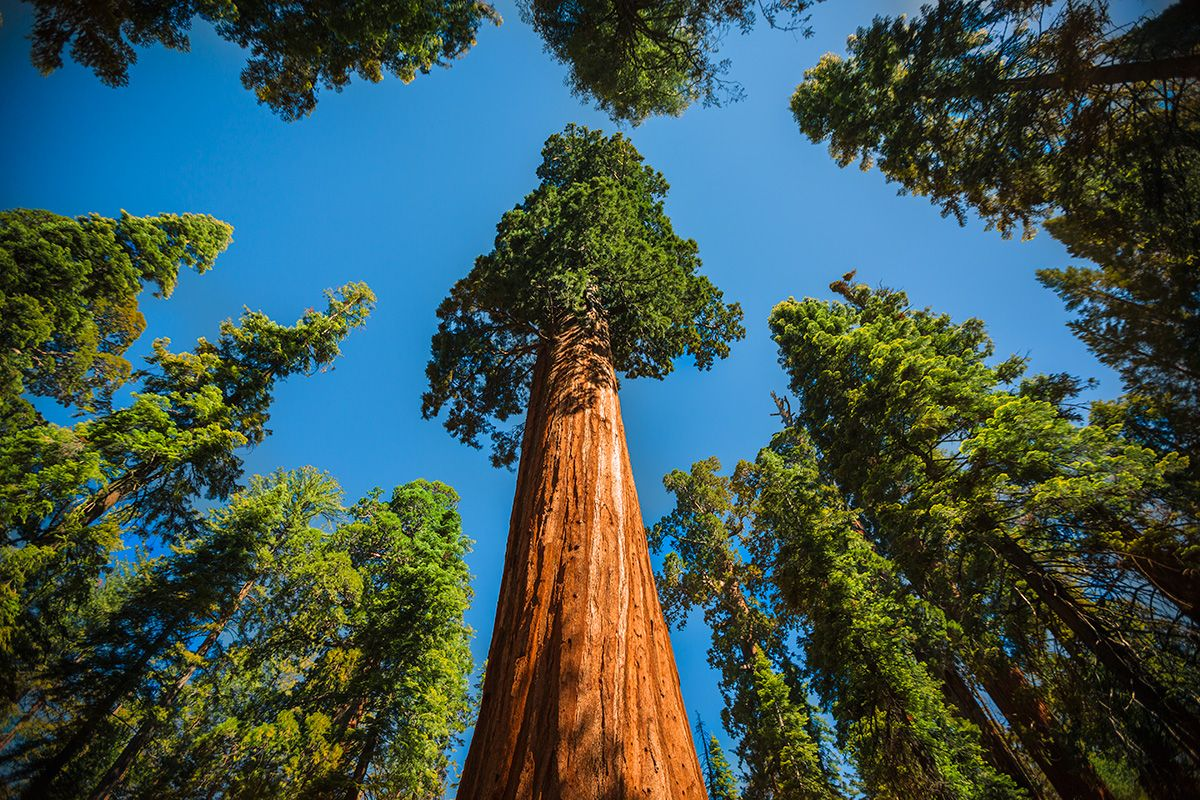 Chuyện về cây cù tùng Karl Marx và ngôi làng Cộng sản ở California