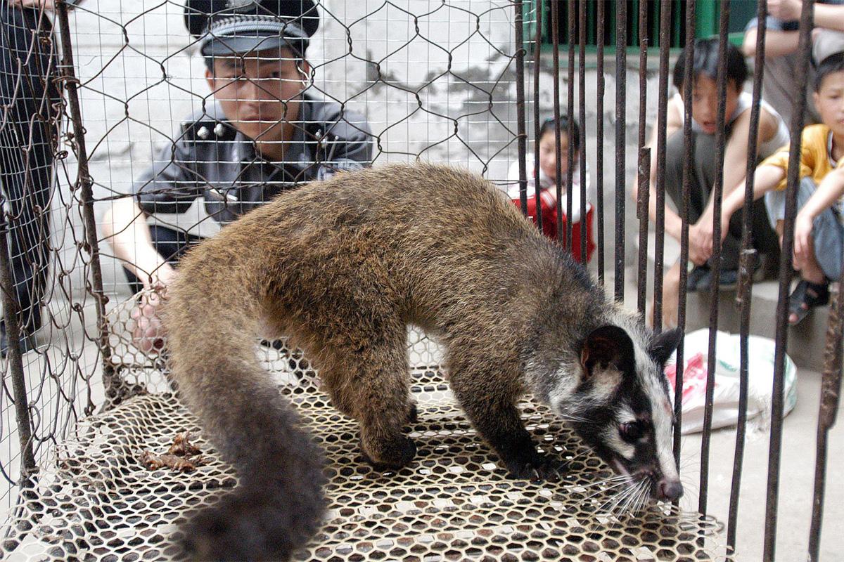 Vì sao các đại dịch lại thường bắt nguồn từ động vật?