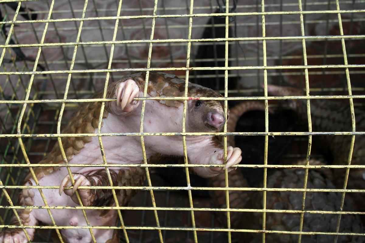 'Loài người có quyền ăn mọi loài khác': Bi kịch của một hoang tưởng