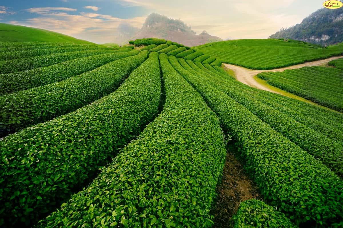 Gợi mở hai mô hình chính sách cho phát triển bền vững ở Việt Nam