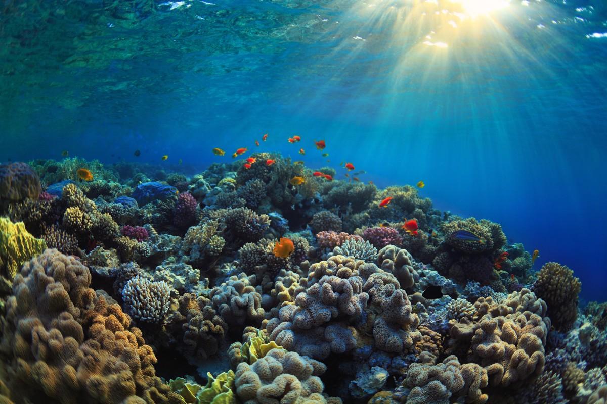 Những điều cần biết về hệ sinh thái rạn san hô