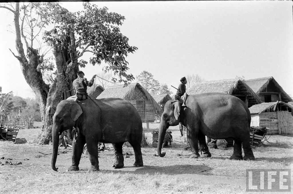 Chùm ảnh: Đàn voi hoành tráng ở Buôn Ma Thuột năm 1957