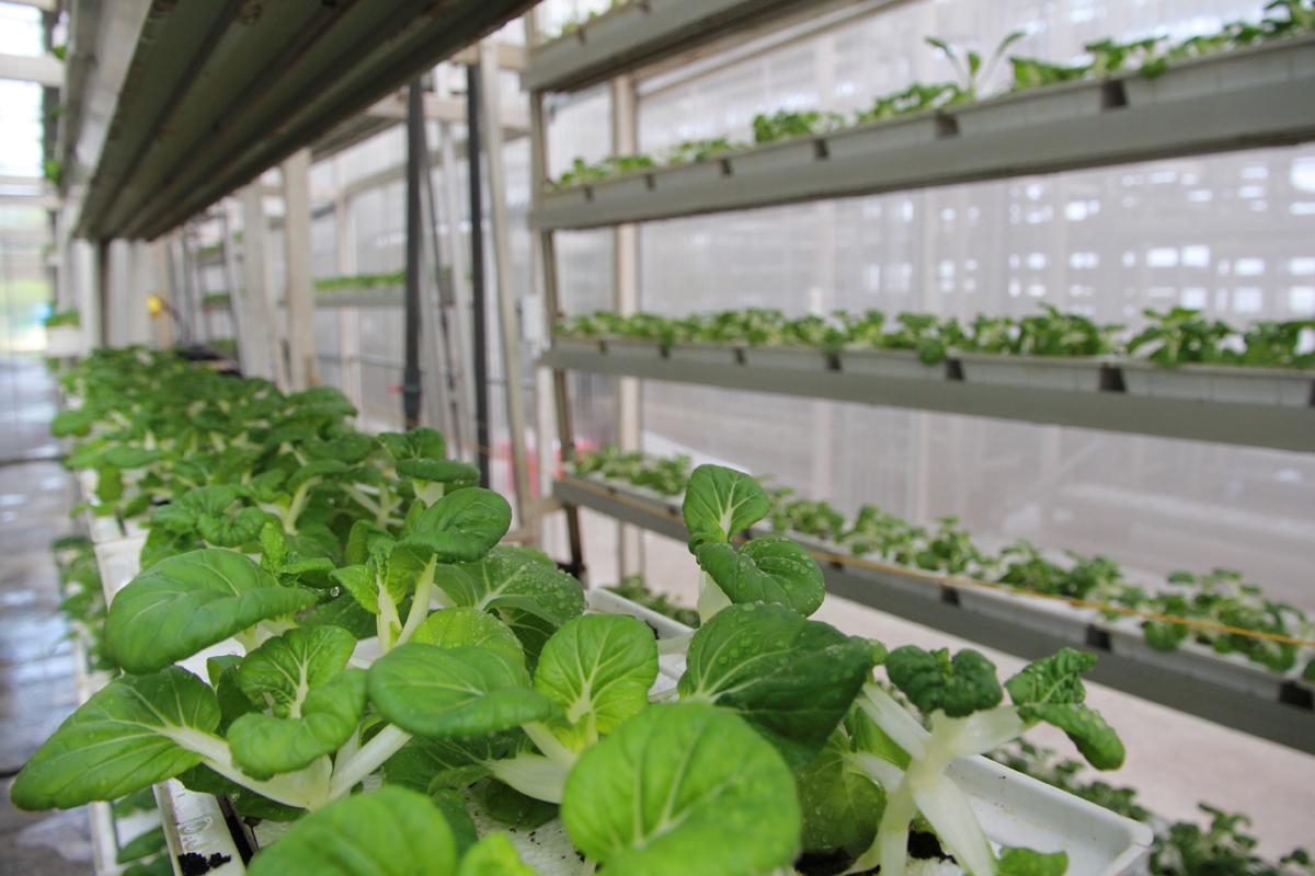 Singapore và bài học về bảo đảm an ninh lương thực thời COVID-19