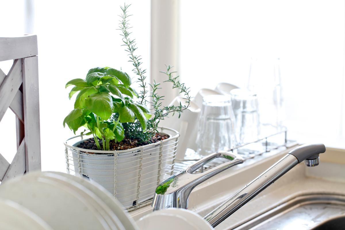 Vì sao bạn nên trồng cây xanh trong nhà bếp?