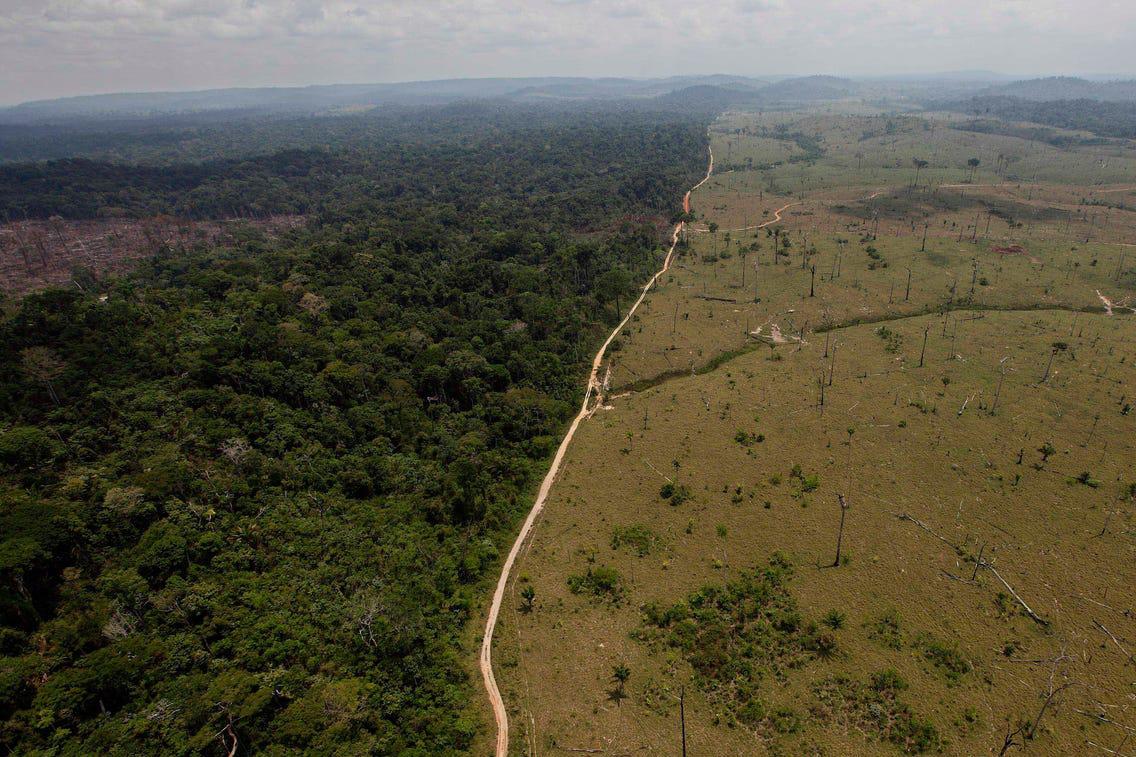 Đại dịch thảm khốc tiếp theo sẽ bắt nguồn từ rừng Amazon?