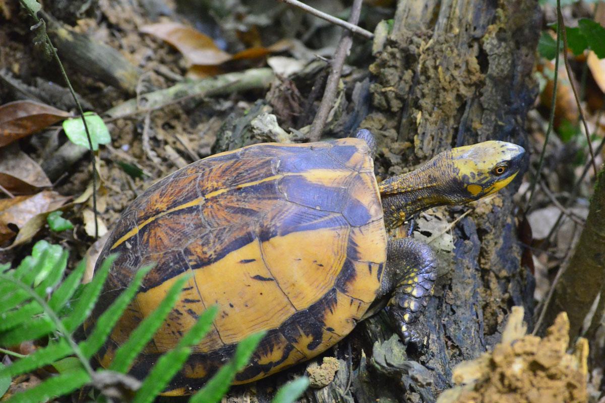 Khắc phục suy thoái đa dạng sinh học: Thách thức và định hướng