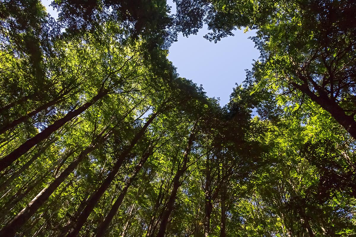 Phát triển bền vững và bảo vệ môi trường có mối quan hệ như thế nào?