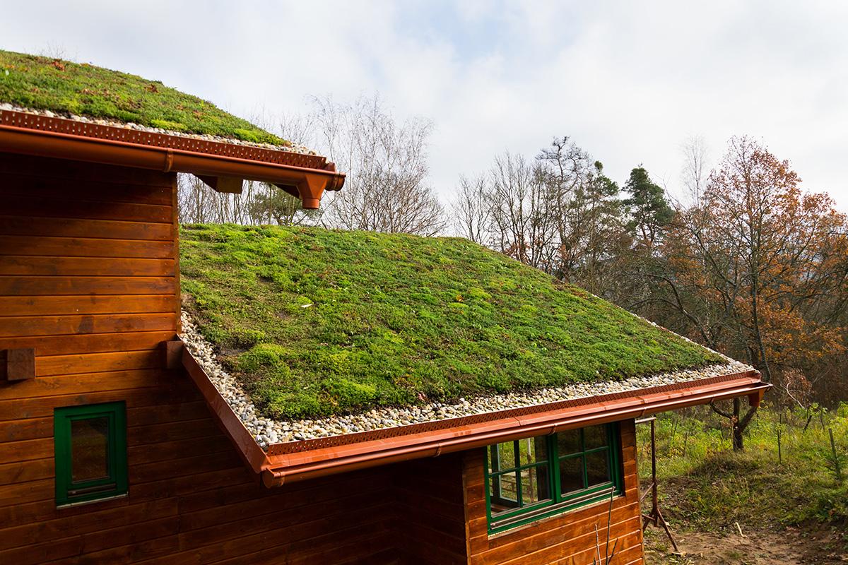 Trồng cỏ trên mái nhà – những điều cần biết