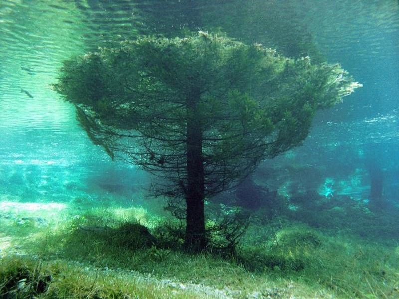 Chùm ảnh: Khám phá công viên chìm dưới nước vào mùa hè ở Áo