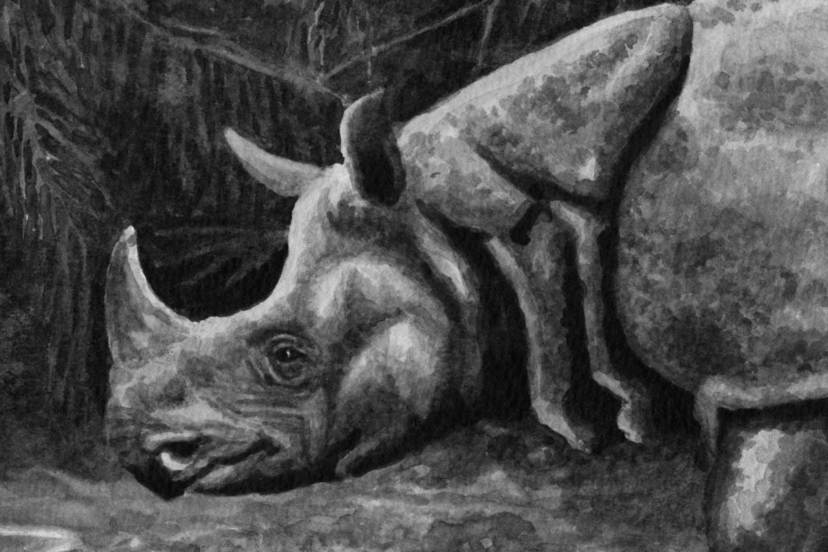 Đàng Trong qua khảo cứu nước ngoài: Cưỡi voi và săn tê giác