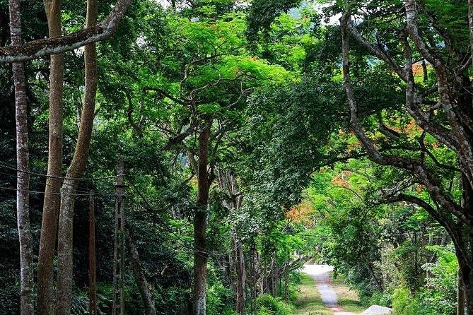 Câu chuyện đau đớn về những khu rừng trống rỗng ở Việt Nam