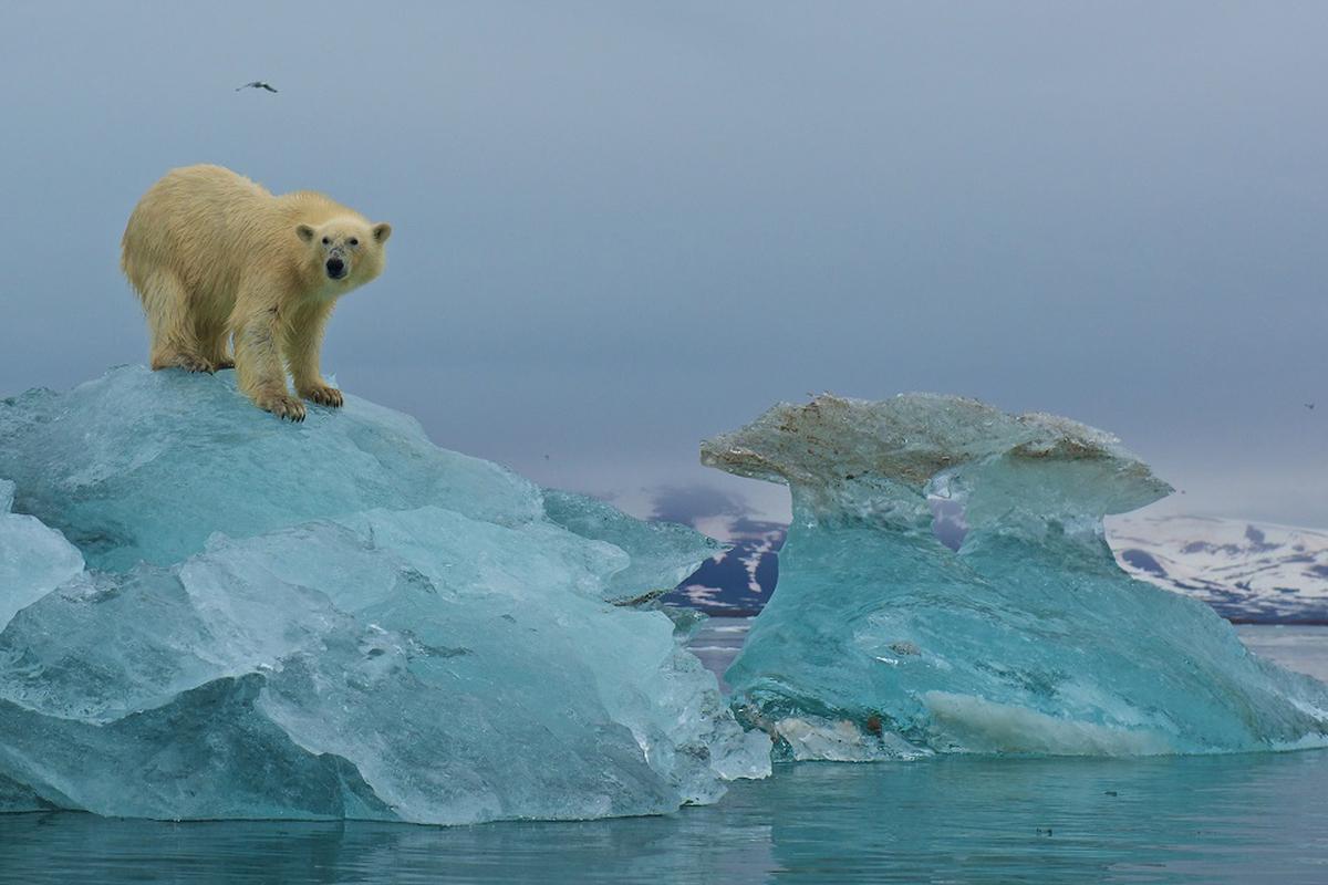 Sự ấm lên toàn cầu và viễn cảnh u ám của cuộc khủng hoảng đa dạng sinh học