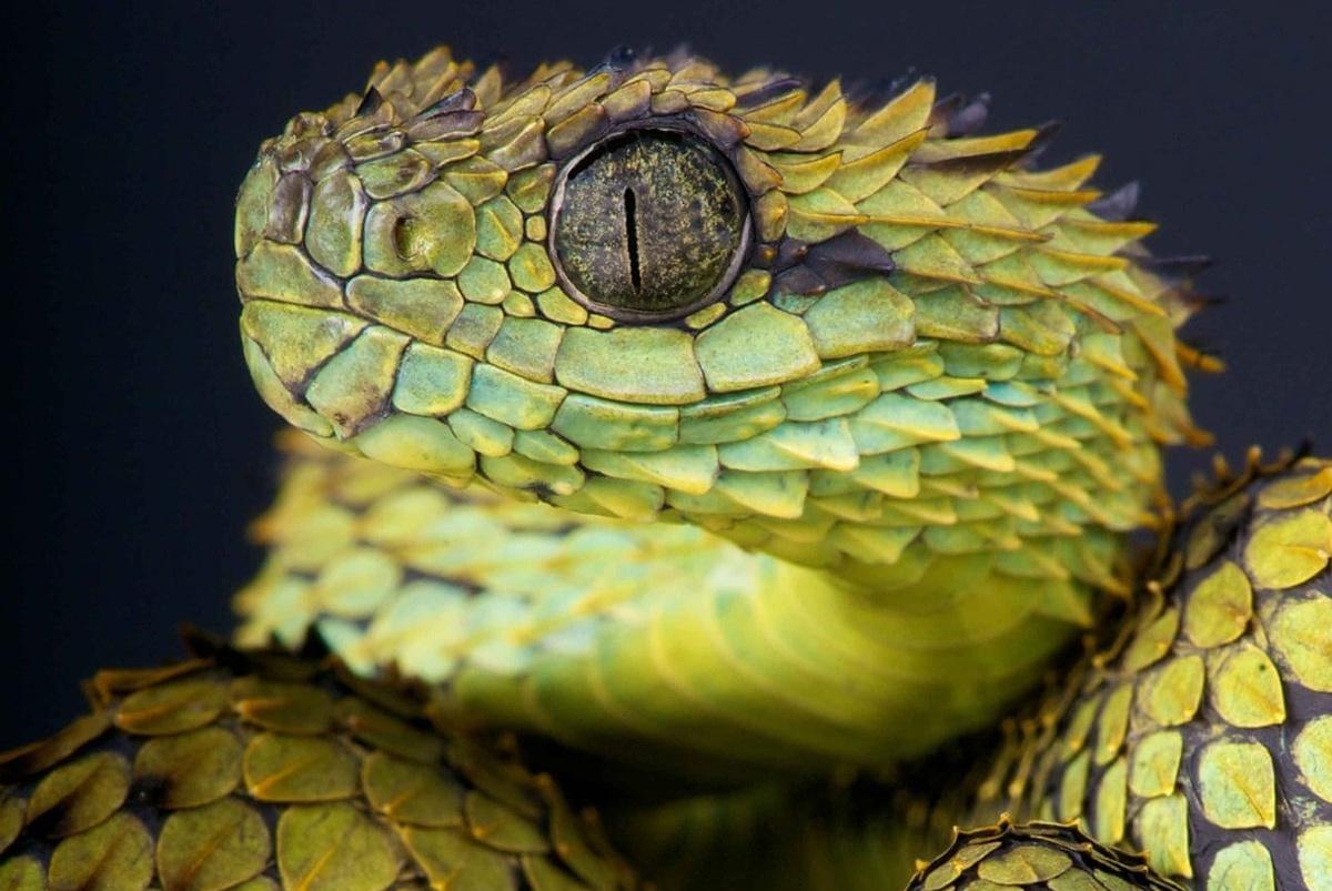 Chùm ảnh: Vẻ đẹp hút hồn của những loài động vật máu lạnh