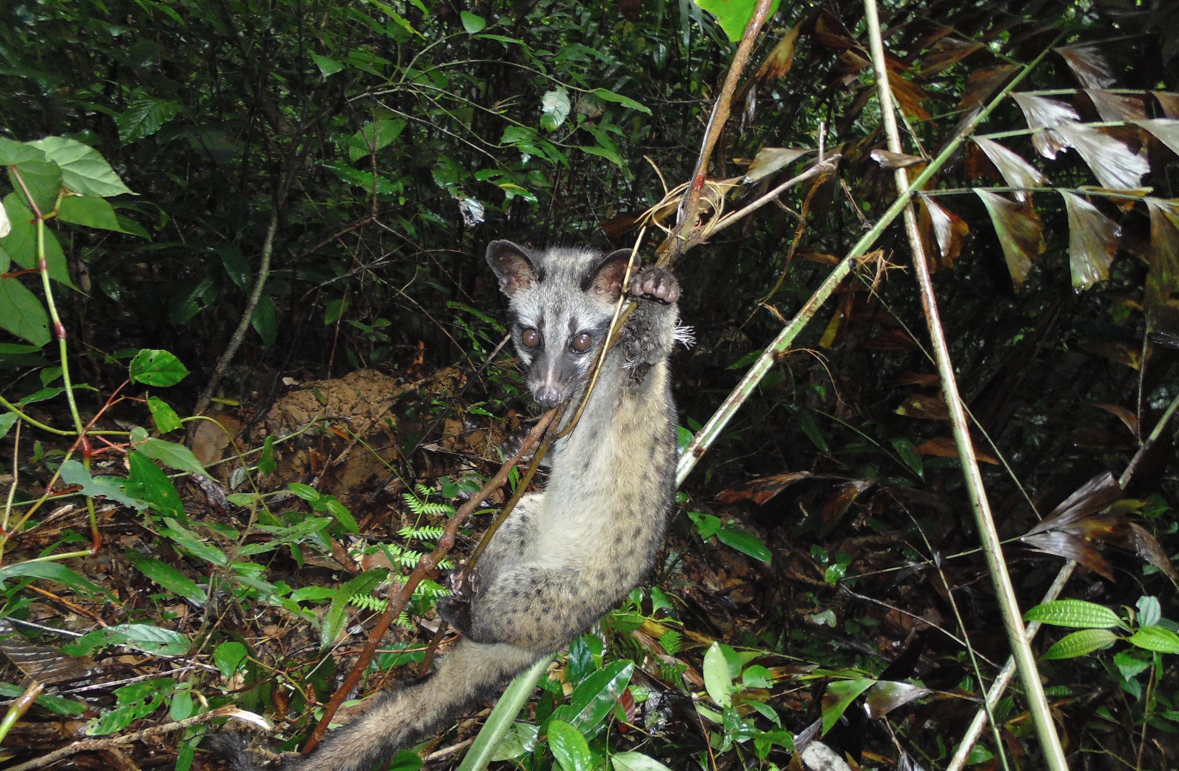 'Đơn giản và giết chóc' – loại bẫy đang huỷ diệt các khu rừng Việt Nam