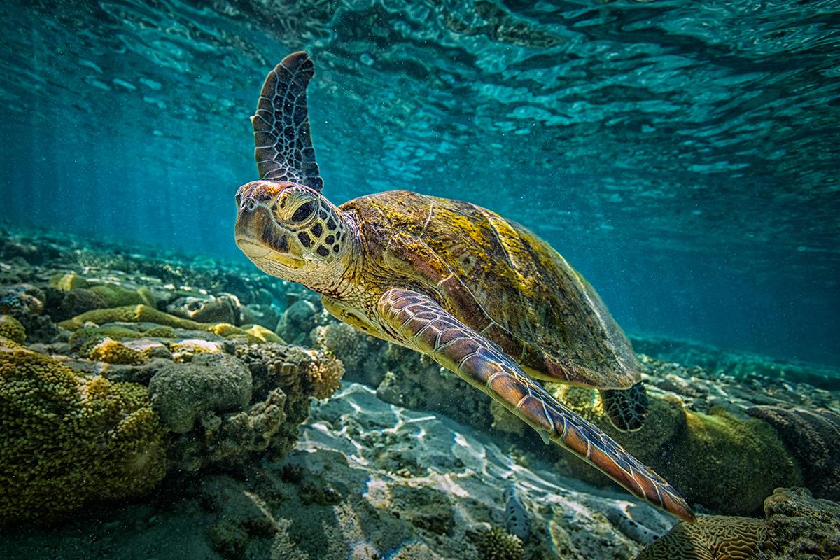 Bài học từ công cuộc bảo vệ loài rùa biển ở Senegal
