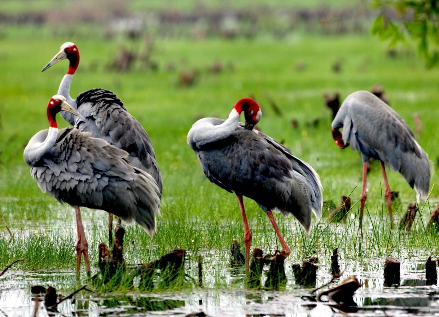 Bảo tồn đa dạng sinh học gắn chặt với phát triển bền vững