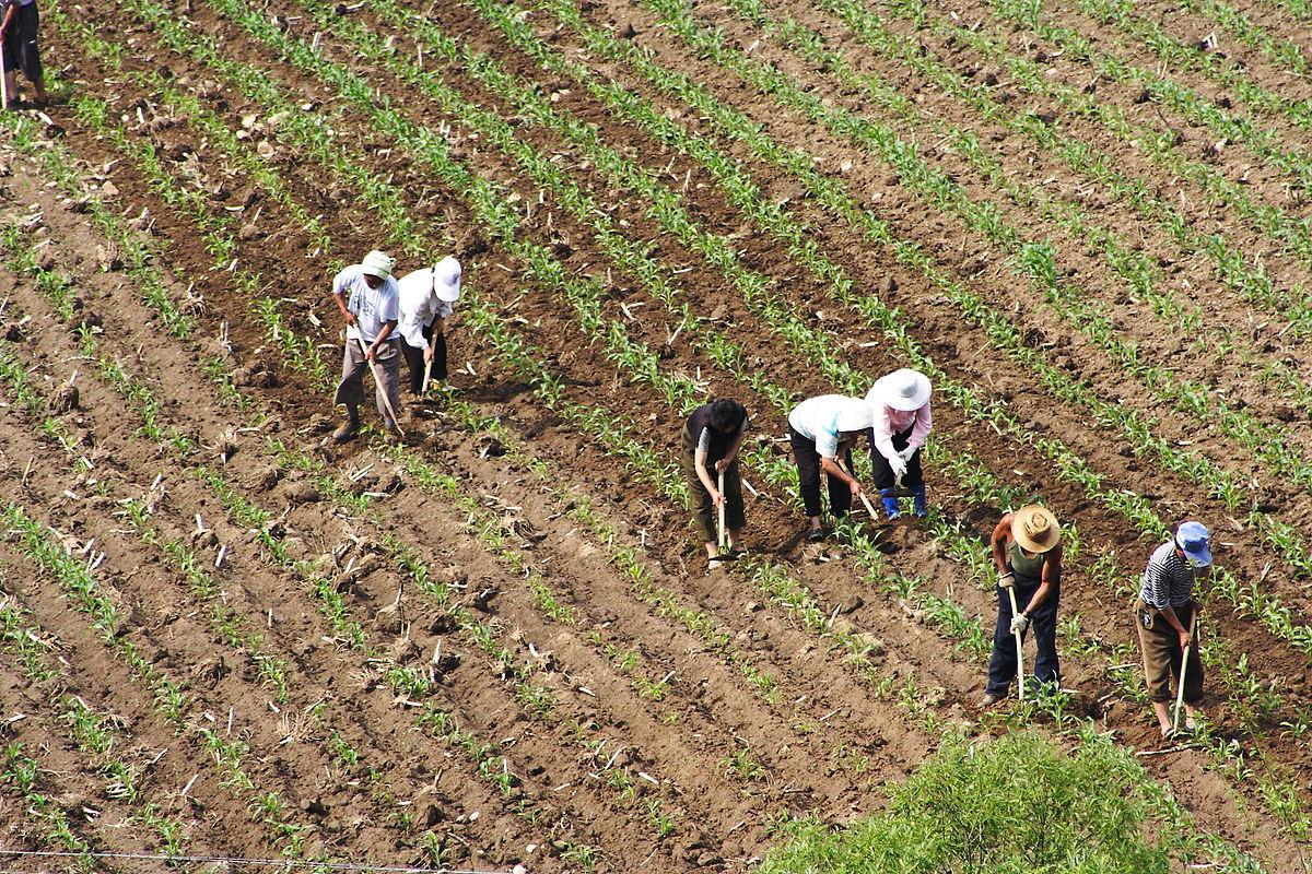 Những ẩn họa trong quản lý đất đai ở Việt Nam