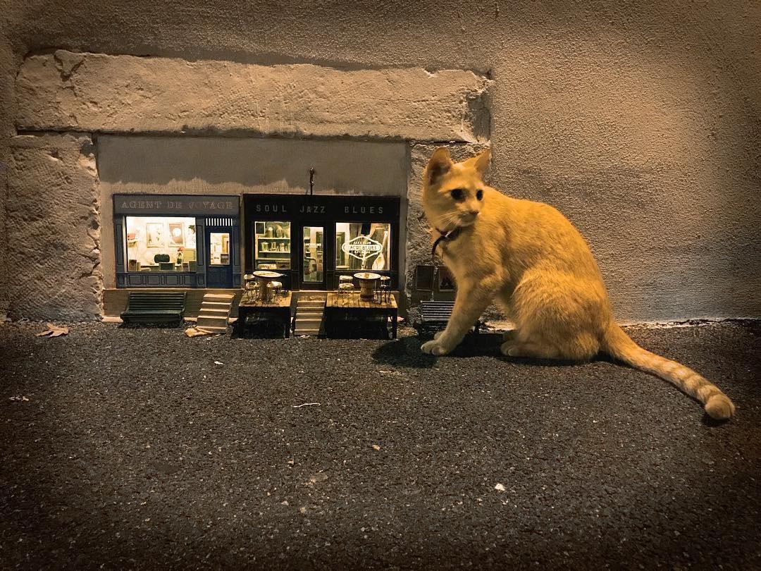 Chùm ảnh: Thế giới thu nhỏ của loài chuột trên đường phố Thụy Điển