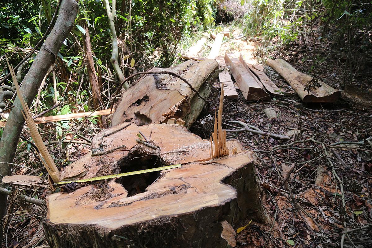 Góc nhìn của chuyên gia quốc tế về tình trạng rừng Việt Nam