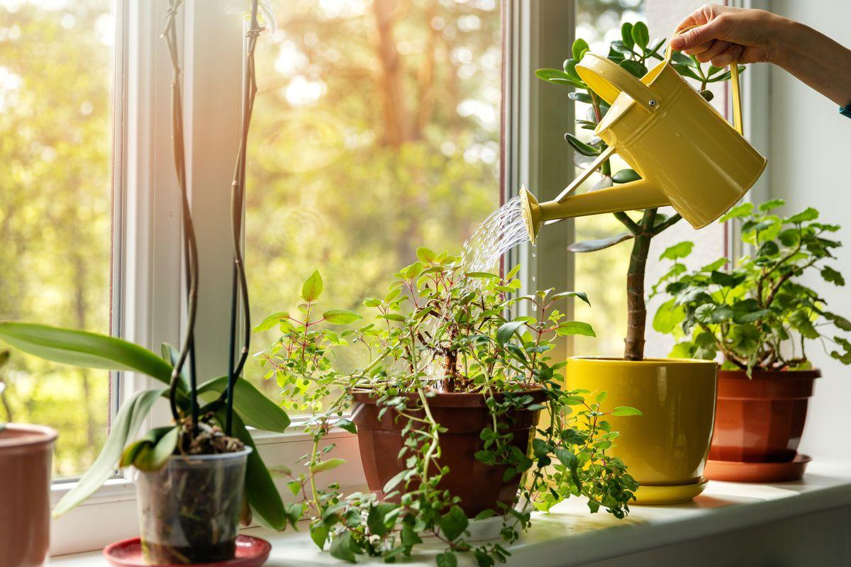 4 nguyên tắc đơn giản thực hiện lối sống xanh trong gia đình