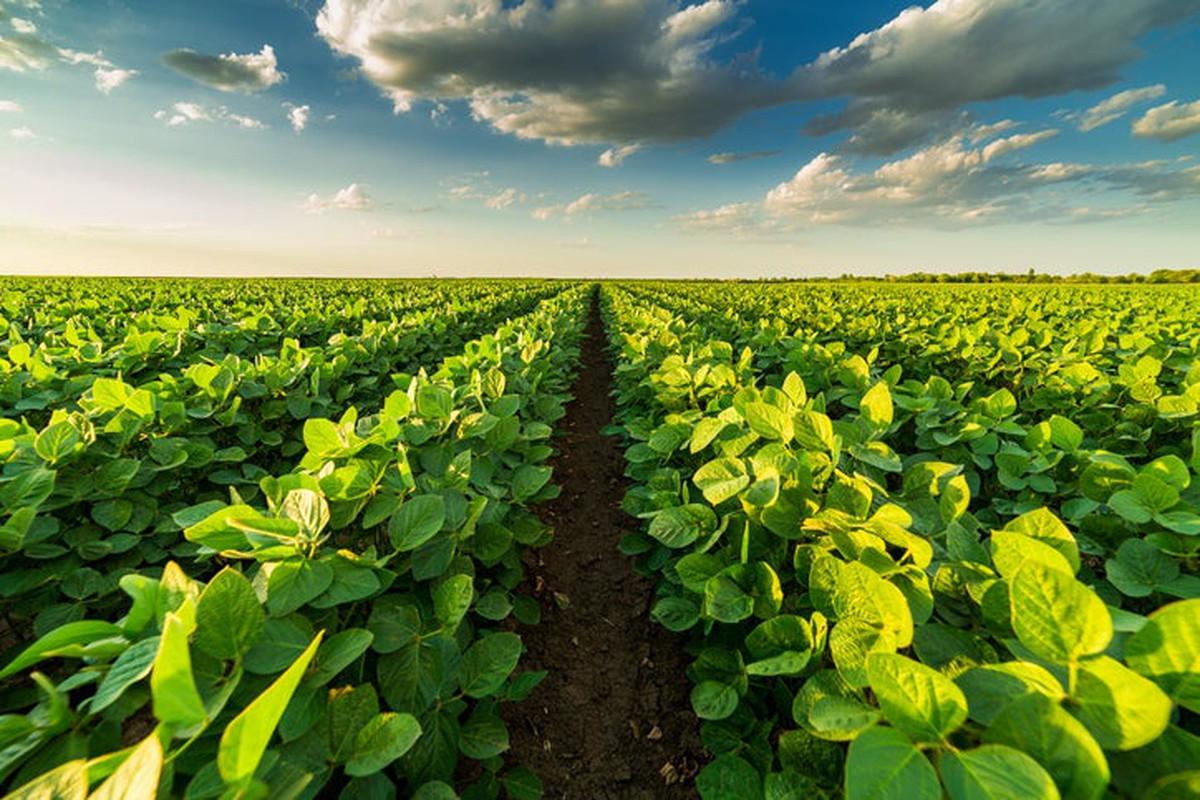 Phát triển hệ sinh thái nông nghiệp bền vững – những điều cần biết
