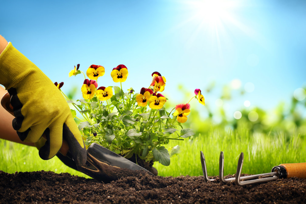 Xây dựng đạo đức sinh thái: Trách nhiệm của con người với tự nhiên