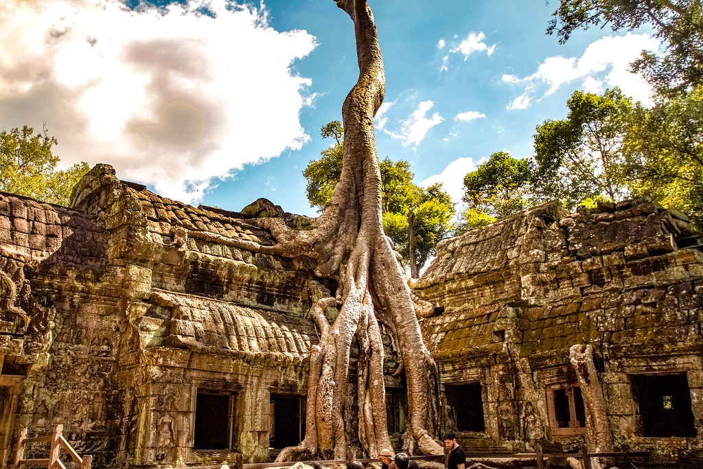 Chùm ảnh: Vẻ đẹp ma mị của Ta Prohm – ngôi đền Khmer 800 tuổi