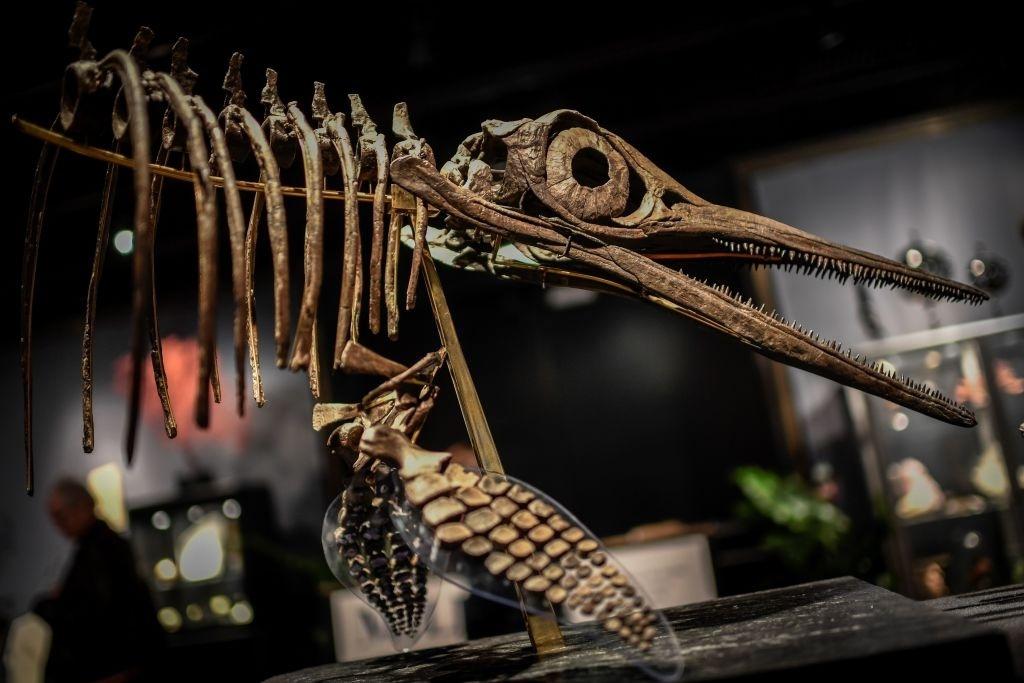 Chùm ảnh: Những dấu tích cuối cùng của loài khủng long