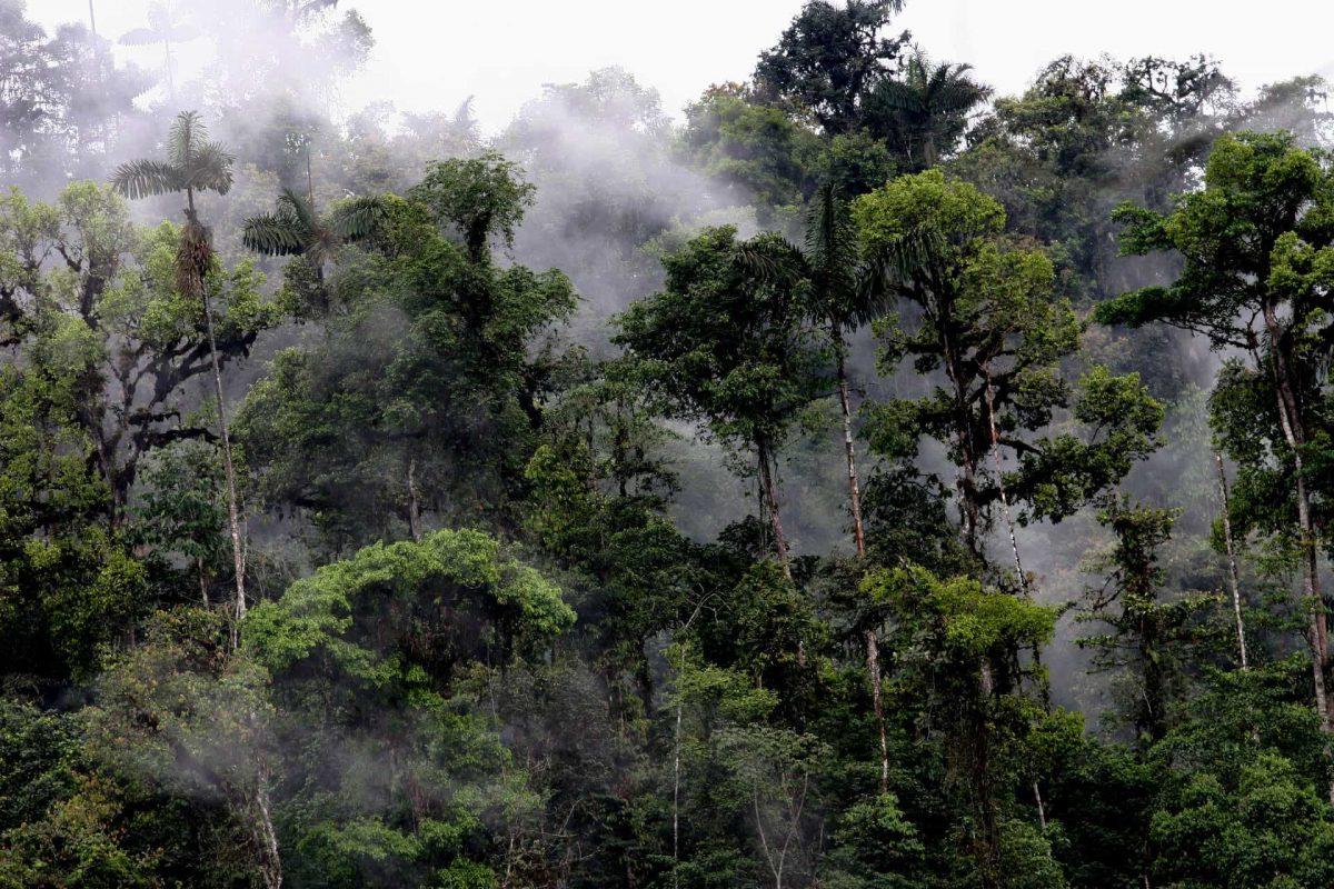 Đừng cho rằng rừng chỉ đơn thuần là những cái cây