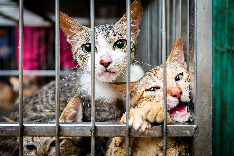 Chúng ta nên ứng xử với các loài vật như thế nào?