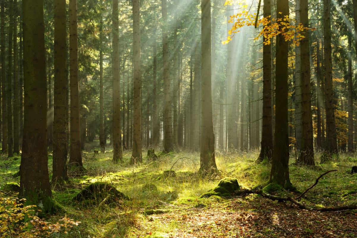 Tắm rừng – phương pháp trị liệu tinh thần của người Nhật